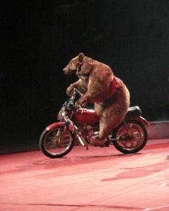 bear-on-motorcycle